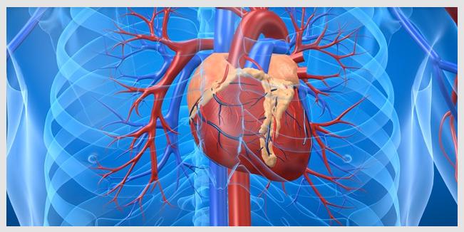 lipoproteína corazon