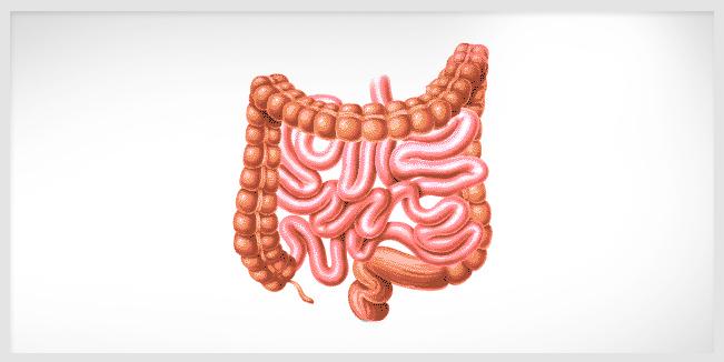 Importancia de la diversidad y la cantidad de la bacteria intestinal.