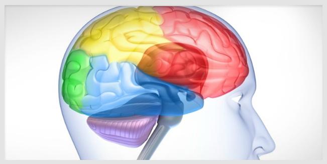 Nuevo estudio sugiere que un nivel bajo de vitamina D causa daños al cerebro