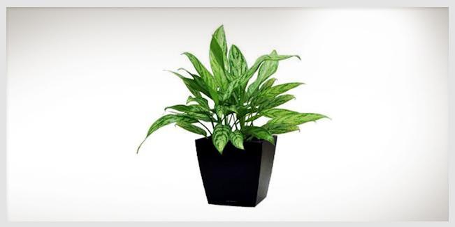 Investigadores australianos han descubierto que las plantas en una oficina hacen más felices a los empleados y elevan