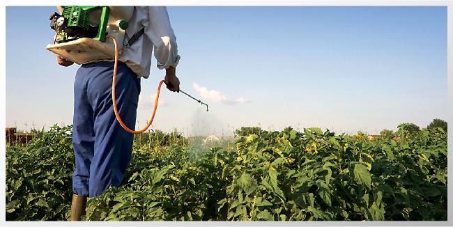 pesticidas y semen