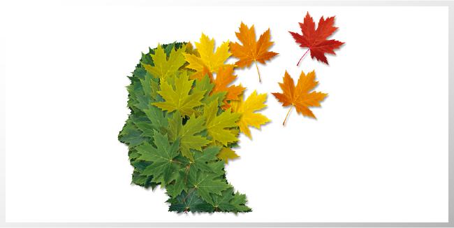 Influencia del medio ambiente en el desarrollo del cerebro