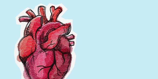 Corazón ¿el órgano que puede curar el cáncer?