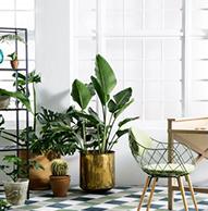 Plantas de Interior que Limpian el Ambiente y no Requieren Mucha Luz