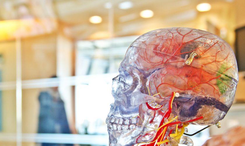 brain entrenar