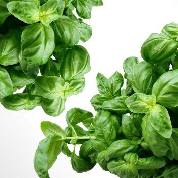 verde plantas