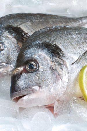 pescado saludable