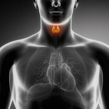tiroides mantener