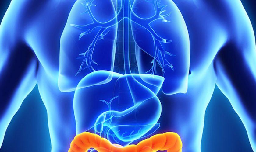 cómo cuidar colon