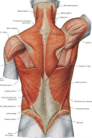 espalda baja